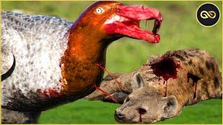 #179. Những Loài Chim Nguy Hiểm & Cục Súc Nhất Hành Tinh Phần 2 | Không Giới Hạn New