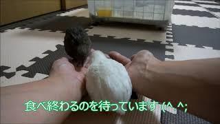 チロにっき+夢 No39 夢、初産! thumbnail