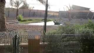 Экскурсии в Дубаи. Экскурсия в Аль - Айн - Оман.(Экскурсия в Аль -- Айн - Оман - это интересная экскурсия, в которую входит: посещение финиковой фермы, минерал..., 2013-04-30T15:54:49.000Z)