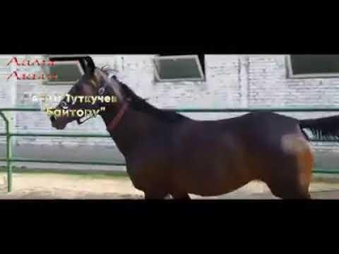 Байтору Аалы Туткучев