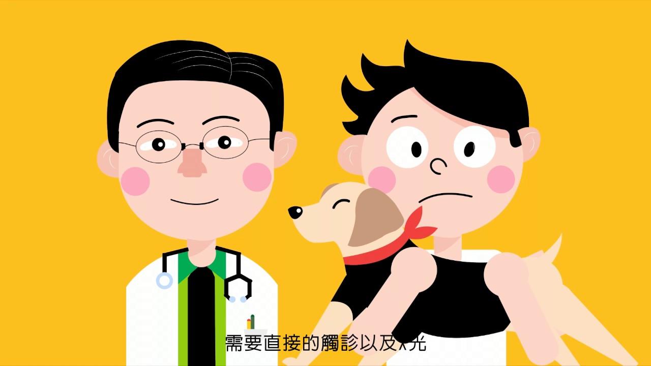 狗狗髖關節形成不良癥篇(CHD)一臺北市名人維東尼動物醫院(Famous Veterinary Hospita) - YouTube