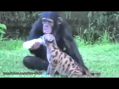 Tình yêu giữa các loài động vật