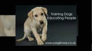 Sue Gilmore - The Canine Training & Behaviour Centre