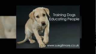 Sue Gilmore - The Canine Training & Behaviour Centre