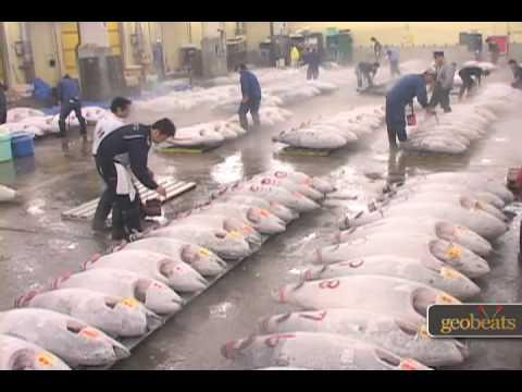 World's Largest Fish Market (Tsukiji) - Tokyo, Japan Travel