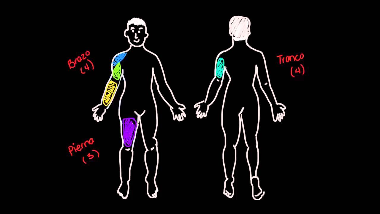 11 grupos principales de músculos - YouTube