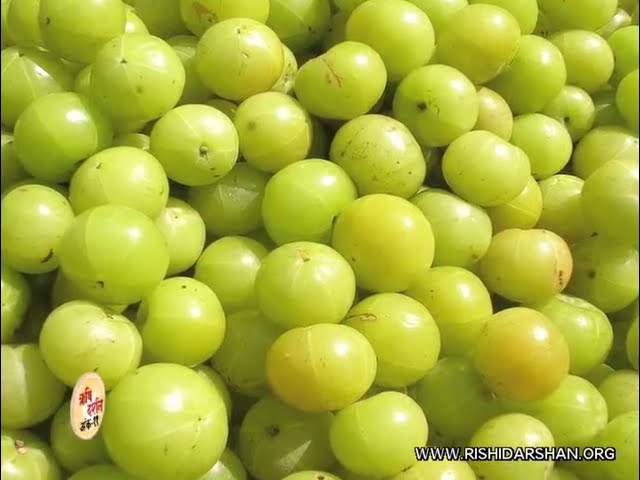 Daily use of Amla in winter is to make you stronger - Pujya Asharamji Bapu Health Tips