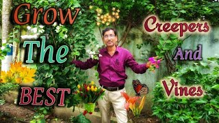 TOP 10 BEST PERMANENT FLOWERING VINES and CREEPERS You Must Grow in your Garden.
