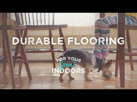 The Great Indoors: Brave