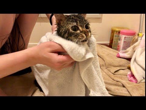 妹の入浴中に突撃しに来てしまった猫w 後編