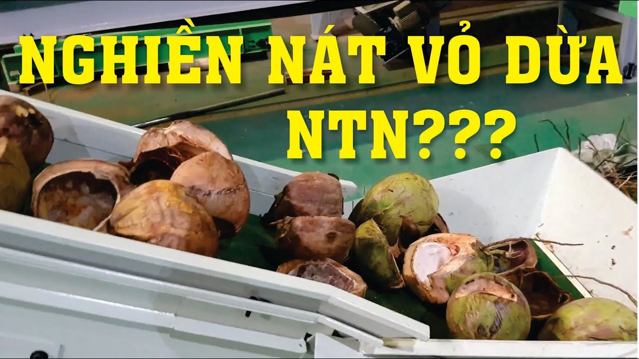 Nghiền vỏ dừa ra bột(mụn dừa) công nghệ thiết bị nghiền xay băm vỏ dừa thành mụn dừa làm phân hữu cơ