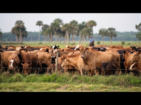 Church-Affiliated Ranch Balances Agriculture and Conservation in Central Florida
