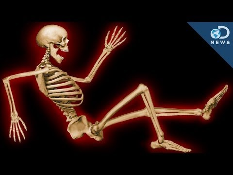 Why Do We Have An Internal Skeleton?
