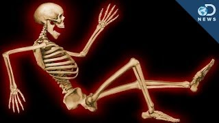 Repeat youtube video Why Do We Have An Internal Skeleton?