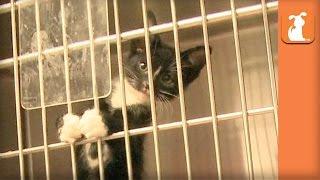 Baby Rescue Kitten Climbs His Cage - Kitten Love