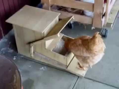 automatic feeder for chickens youtube. Black Bedroom Furniture Sets. Home Design Ideas
