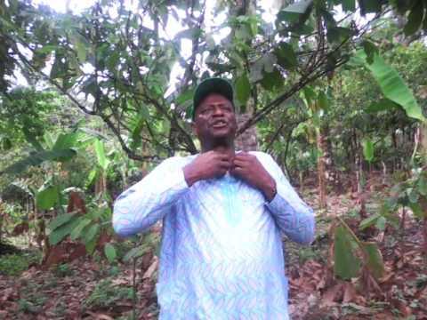 Organic Cocoa Farming