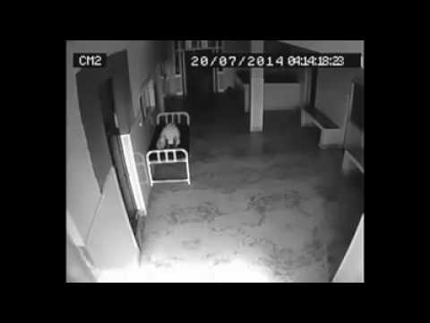 real horror  in cctv camera recorded