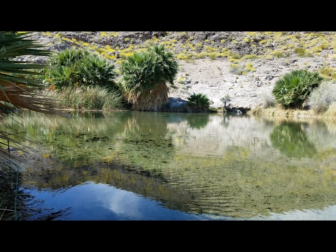 TROPICAL FISH HATCHERY At Lake Mead