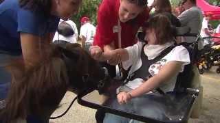 Therapy Horses Thumbnail