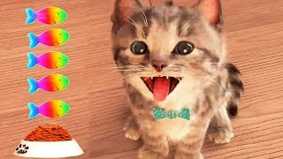 Little Kitten My Favorite Cat Pet Care Game - Fun Play Kitten Mini Games For Children