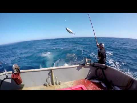 Albacore Tuna Commercial Fishing