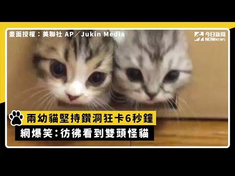 兩幼貓堅持鑽洞狂卡6秒鐘 網爆笑:彷彿看到雙頭怪貓