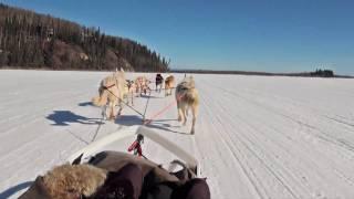 Dog Sledding - Mushing  In Fairbanks, Alaska