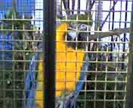 talking birds prt 2