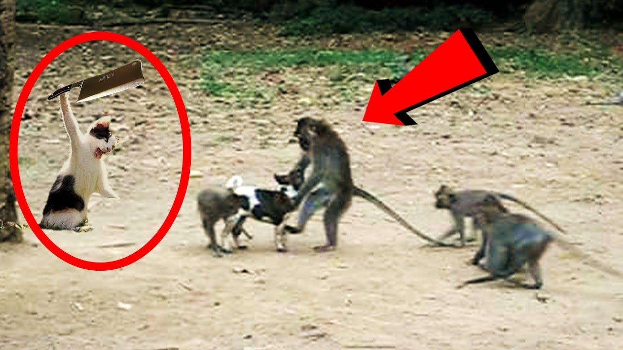 देखलो इनकी हरकते ,जानवरों के ऐसे कारनामे देखने के लिए नसीब लगता है | Best Funny Animal Moments