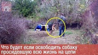 Что будет если освободить собаку просидевшую всю жизнь на цепи [СЖ]
