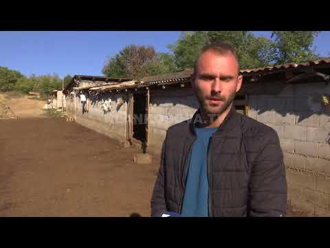 Bariu mashtrues qe shiti bagetine e pronarit - 12.10.2017 - Klan Kosova