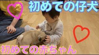 へきとらハウス→ https://www.youtube.com/user/TNS24ch いつも動画見て...