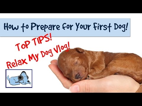 How to Prepare Before Getting a Dog