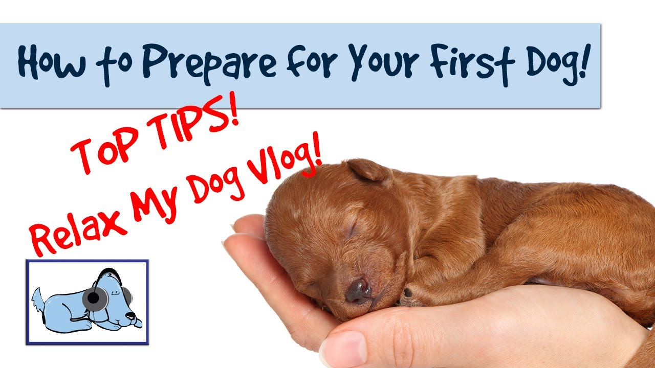 How to Prepare Your Dog for the Vet