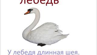 № 206   КАК НАЗЫВАЮТСЯ ПТИЦЫ / русский язык