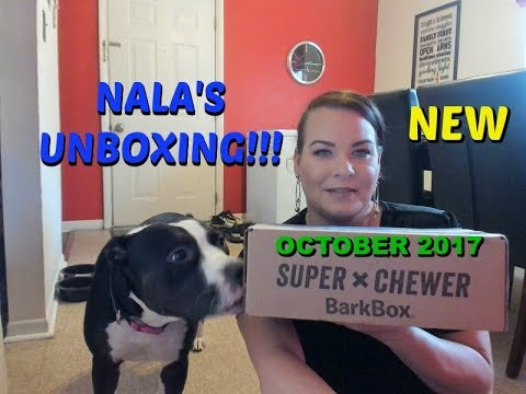 new-subscription-..-barkbox-unboxing-for-power-chewer-//-pitbull-puppy