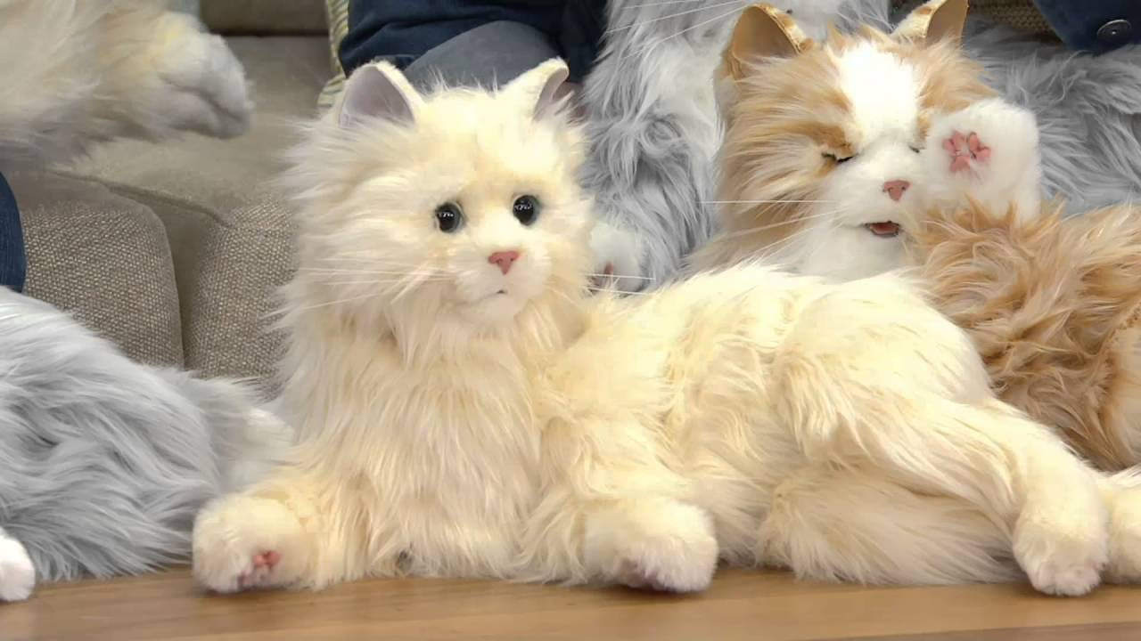 Hasbro's Lifelike Joy for All Companion Cat By: Hasbro on QVC