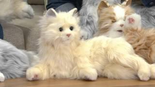 Hasbro's Lifelike Joy for All Companion Cat By: Hasbro on QVC