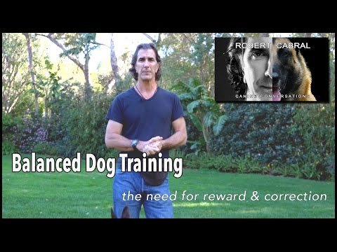 Balanced Dog Training and Corrections in Dog Training - Robert Cabral