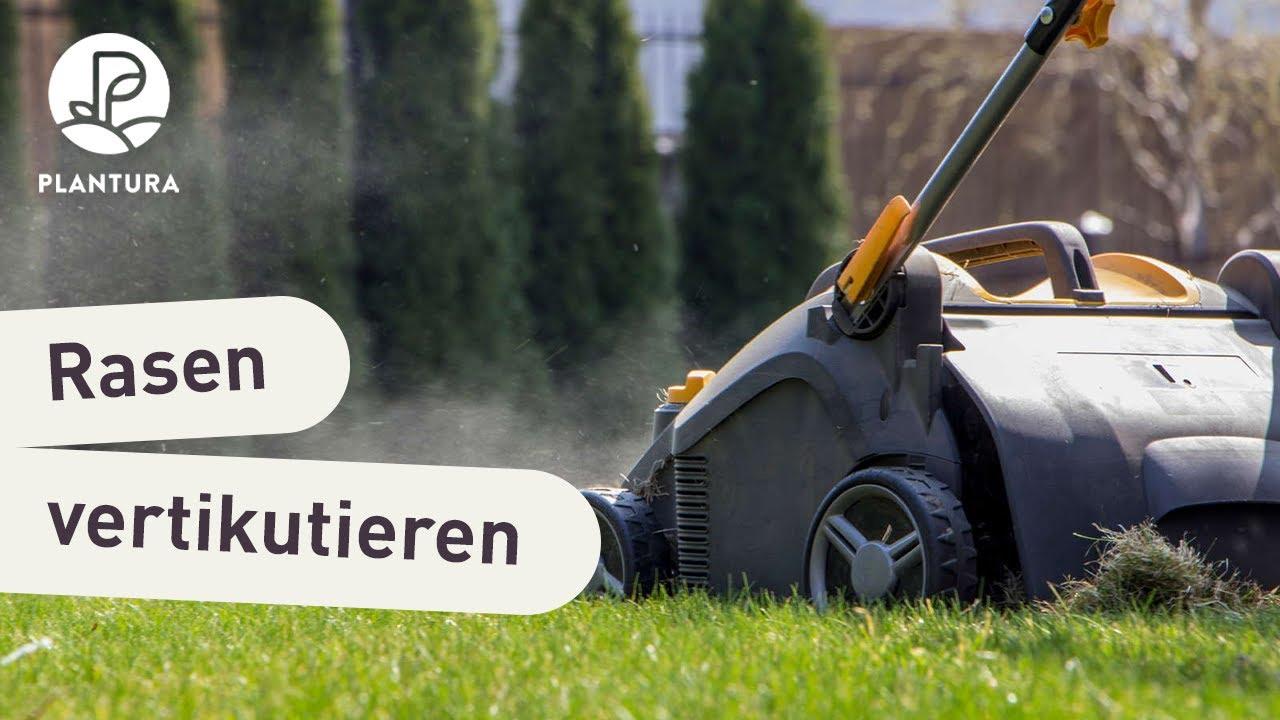 Rasen Vertikutieren Warum Wann Wie Oft Plantura
