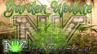 Garden Update 8/17/18