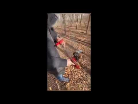 @武器酷@ 獵鷹 勾魂 野戰狼 機械大師 滑膛彈弓 彈弓 軸承 滑動 圓皮筋 越南彈弓 鋼珠 皮兜 便攜彈弓