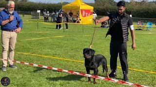 British National Sieger 2020 | Rottweiler Dog Show