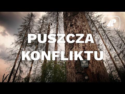 Puszcza konfliktu - jak chronić Puszczę Białowieską