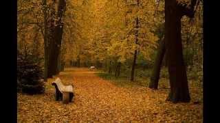 «Рябиновое танго», музыка Владимира Мигули, стихи Юрия Гарина, поёт Инна Вачнадзе
