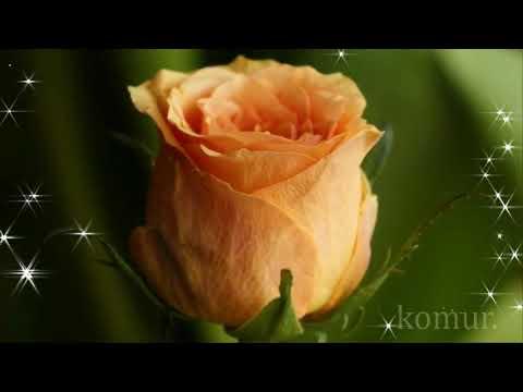 КРАСИВАЯ МУЗЫКАЛЬНАЯ ОТКРЫТКА ПОЗДРАВЛЯЕМ!#музыкальная открытка#   Komur
