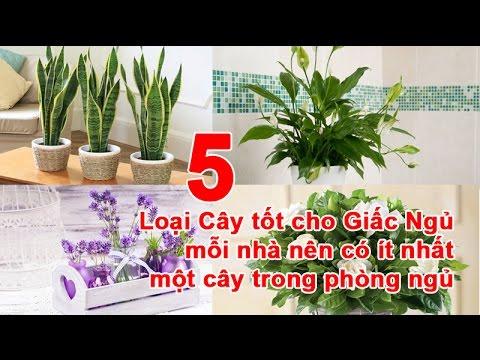 5 Loại Cây Tốt cho Giấc Ngủ mỗi nhà nên có ít nhất một cây trong phòng ngủ