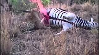 南アフリカにて、やや衝撃的な自然のワンシーンが目撃された。 その光景...
