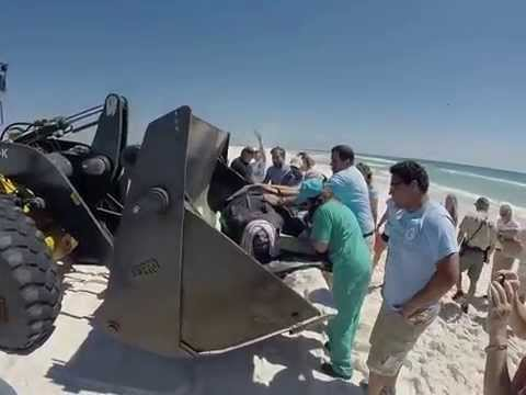 Gulfarium's Sea Turtle CARE Progam rescues 600-lb leatherback in Pensacola Beach